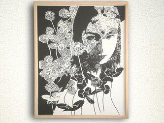 Clover/白詰草の画像