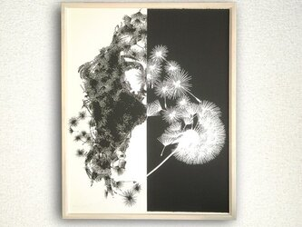 dandelion/タンポポの画像