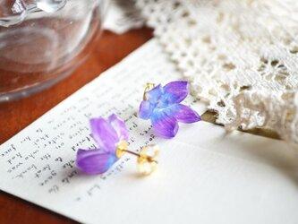 涼花 紫ピアスの画像