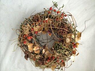 山芋のツル、ツルウメモドキ リースの画像