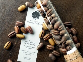"""Seed mania bottle """"Cunary date""""の画像"""