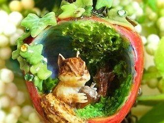 リスの宝物(りんごの森の小さな住人シリーズ)の画像