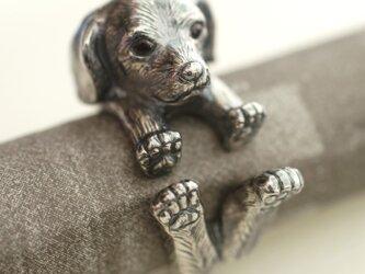 犬リング ミニチュアダックスフントの画像