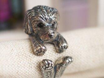 犬リング トイプードルの画像