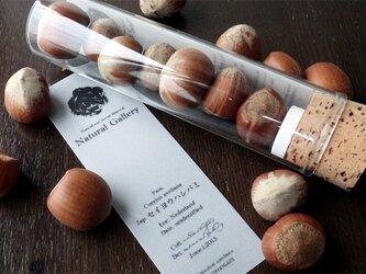 """Seed mania bottle """"Hazelnut""""の画像"""