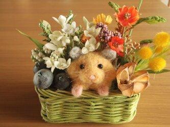 キンクマハムスターの花かごの画像