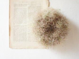 スモークツリーのリース マーブル 21㎝の画像