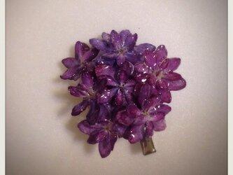 本物のアジサイの花で作った髪飾り(あかむらさき)の画像