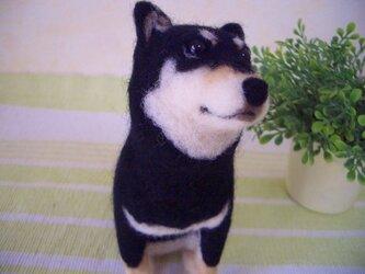 黒柴犬*羊毛フェルトの画像
