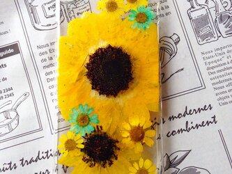 夏新作ヒマワリiPhone6押し花の画像