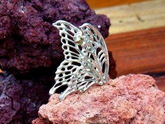 蝶のピアスの画像