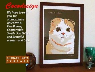 湘南Cats ポートレイト1 スコティッシュフォールドの画像
