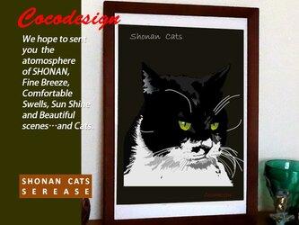 湘南Cats ポートレイト2 白黒ネコの画像