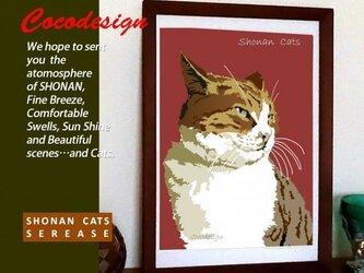 湘南Cats ポートレイト3 ハンサム トラ猫の画像