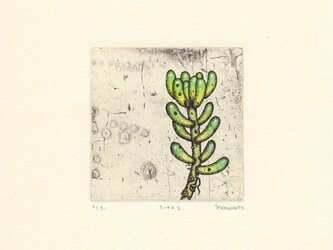 多肉植物の銅版画02 カラータイプ2の画像