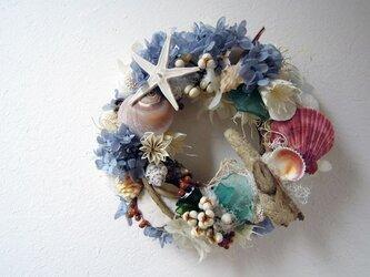 海のリース(赤い貝)の画像