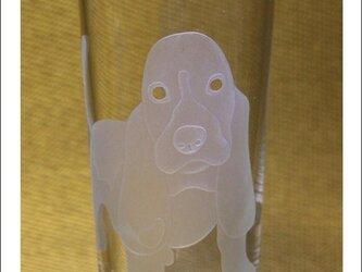 ビーグル犬グラスの画像