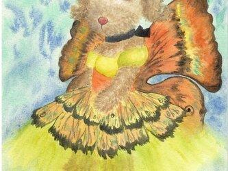 蝶々犬(Butterfly)の画像