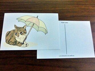 パラソル猫*2枚組の画像