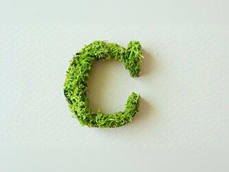 アルファベット オブジェ(モス) 木製『C』×1点の画像