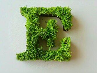 アルファベット オブジェ(モス) 木製『E』×1点の画像