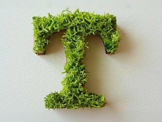 アルファベット オブジェ(モス) 木製『T』×1点の画像