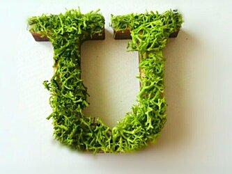 アルファベット オブジェ(モス) 木製『U』×1点の画像