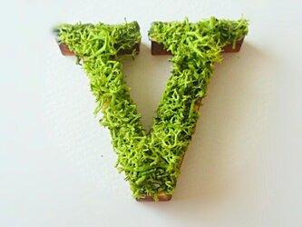 アルファベット オブジェ(モス) 木製『V』×1点の画像
