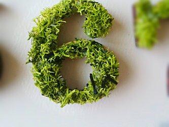 数字 オブジェ(モス) 木製『6』×1点の画像