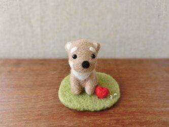 ミニ柴犬☆の画像