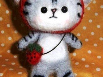 いちご頭巾の子猫(本多さまご予約分)の画像