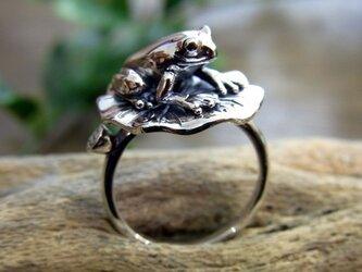 蓮の葉の上で佇む蛙リングの画像