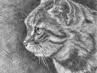 ペットの肖像画の画像