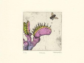食虫植物の銅版画01 カラータイプ2の画像