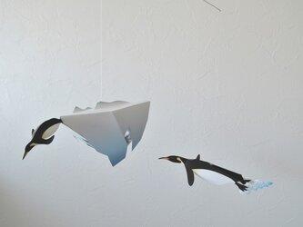 泳ぐペンギンの画像
