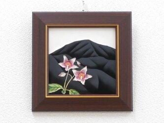 なつかしの山・思い出の花シリーズ「越前岳・岩タバコ」 の画像