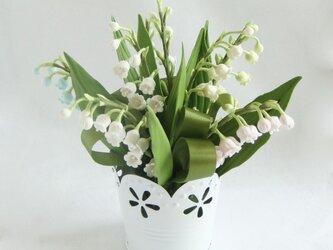 小さな植木鉢 カラフルなスズランの画像