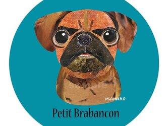 プチ ブラバンソン《犬種名ステッカー/小型犬》の画像