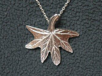 もみじ葉ゼラニウムの葉の画像