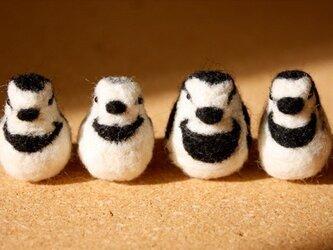 羊毛フェルト ハクセキレイ夏羽・冬羽4体セットの画像