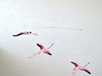 羽ばたくフラミンゴの画像