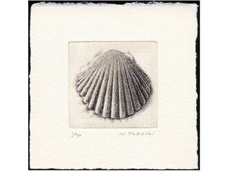 貝殻・F / 銅版画 (額なし)の画像