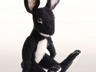 レッキス種ウサギの画像