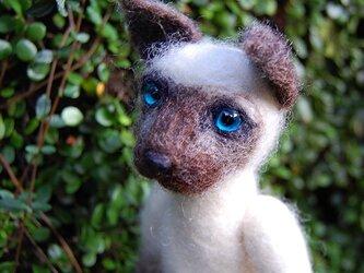 シャム猫の画像