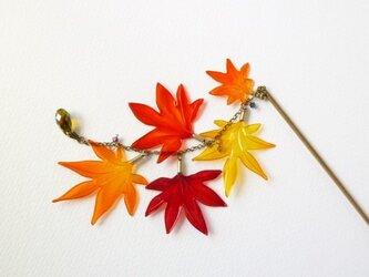 紅葉かんざし 秋時雨の画像