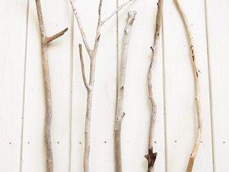 流木素材(セット) 017  [約L44~63cm]の画像