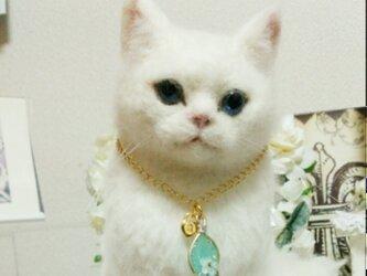 白猫ちゃんの画像