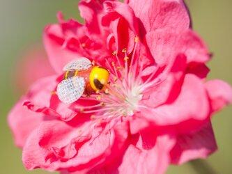 森の標本博物館-ミツバチ- (ピンバッジ)の画像