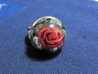 紅バラ♦シルバ-リングの画像