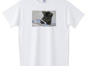半袖Tシャツ(男女兼用Mサイズ)の画像